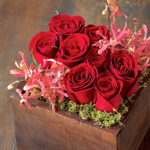 Rococo Scarlet Blooms