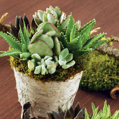 Succulent Birch Planter