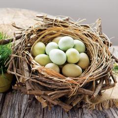 Spring Nest & Wood Eggs